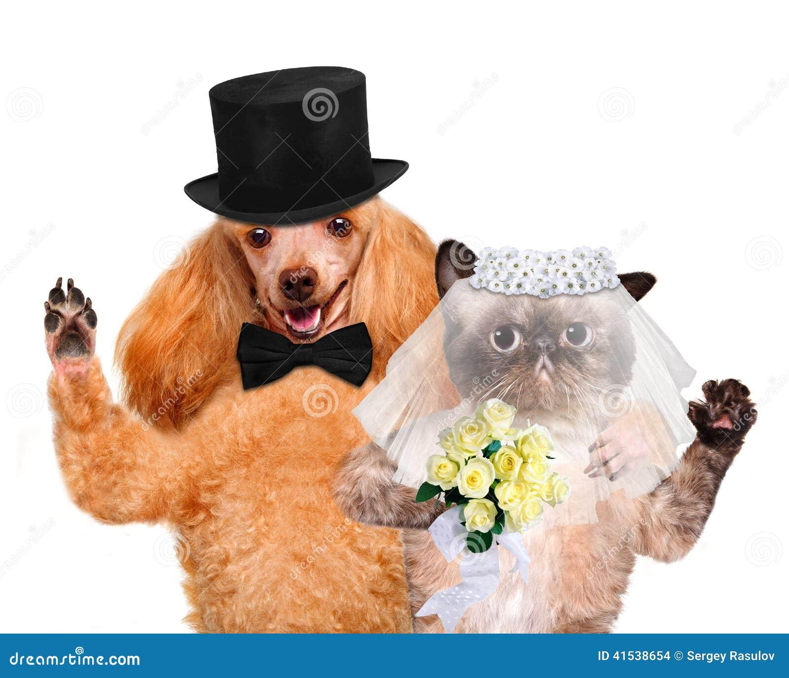 cat and dog wedding stock photo image 41538654