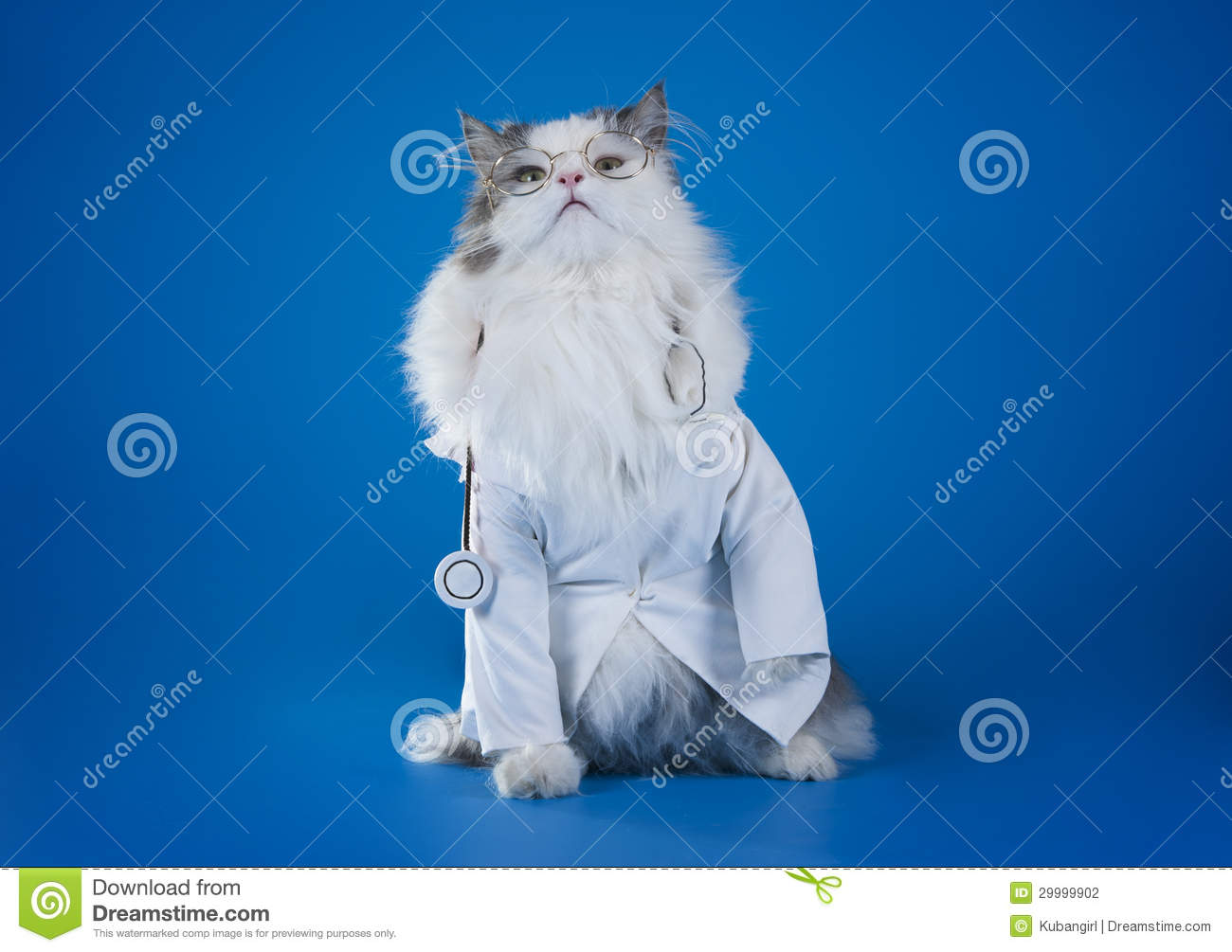 Dr. Cat Stock Photography - Image: 29999902