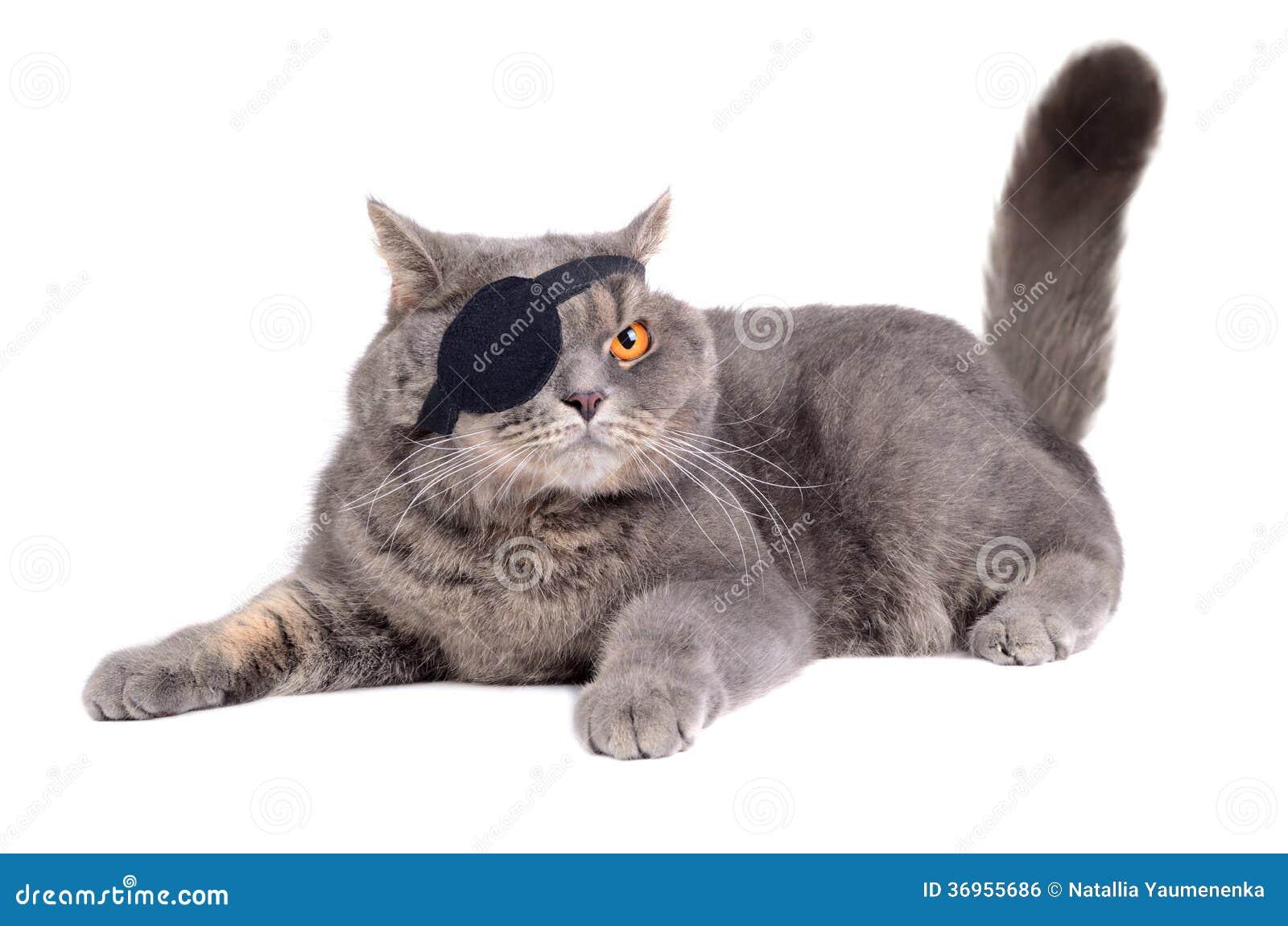 Cat In Pirate Halloween Costume Video