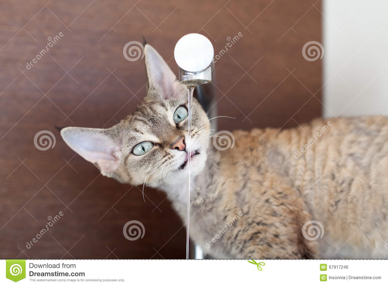 Cat Drinking Fresh Water From The Faucet Stock Photo - Image of ...