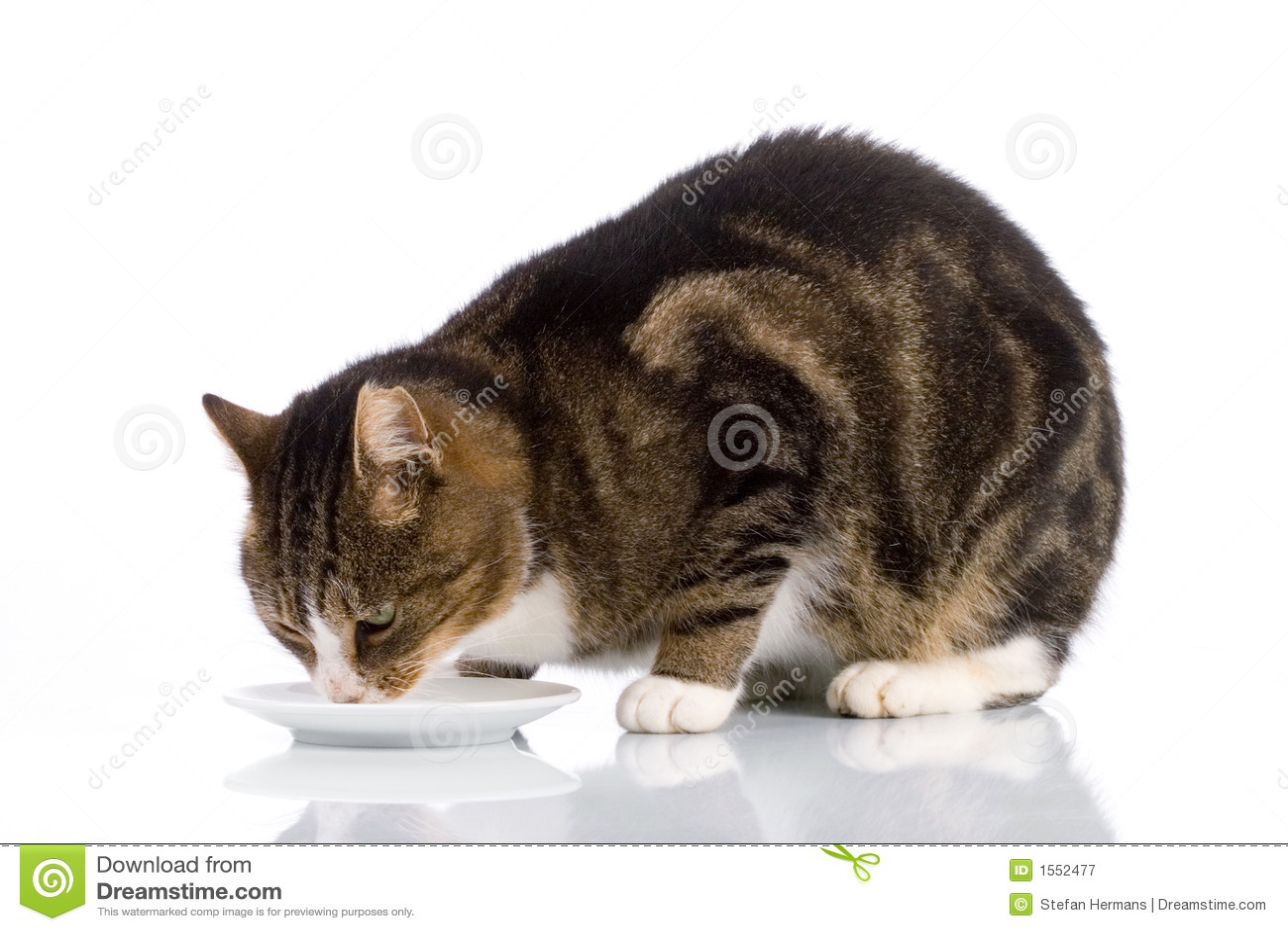 Hairy cats eat milk