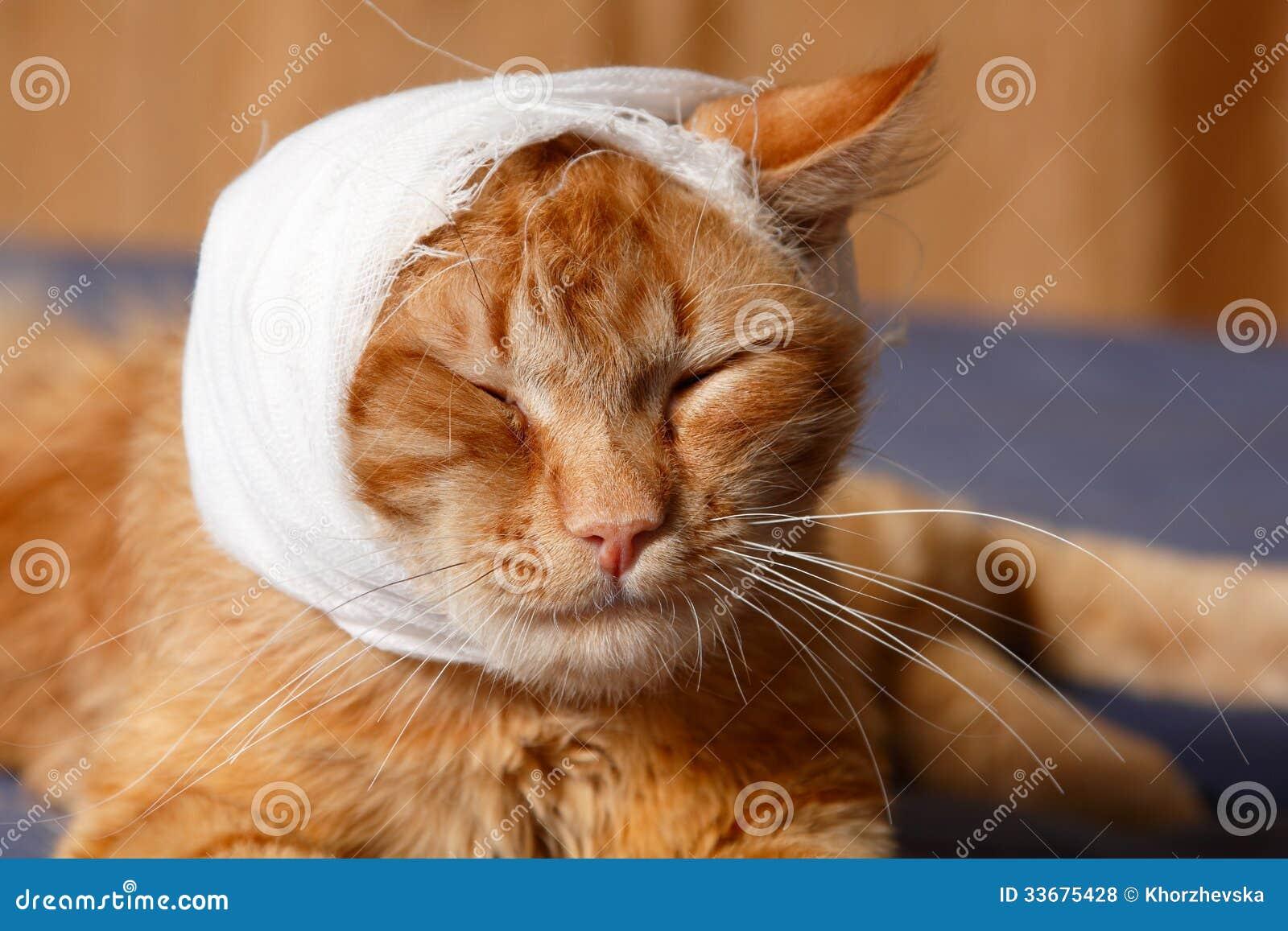 How To Bandage Dog S Ear