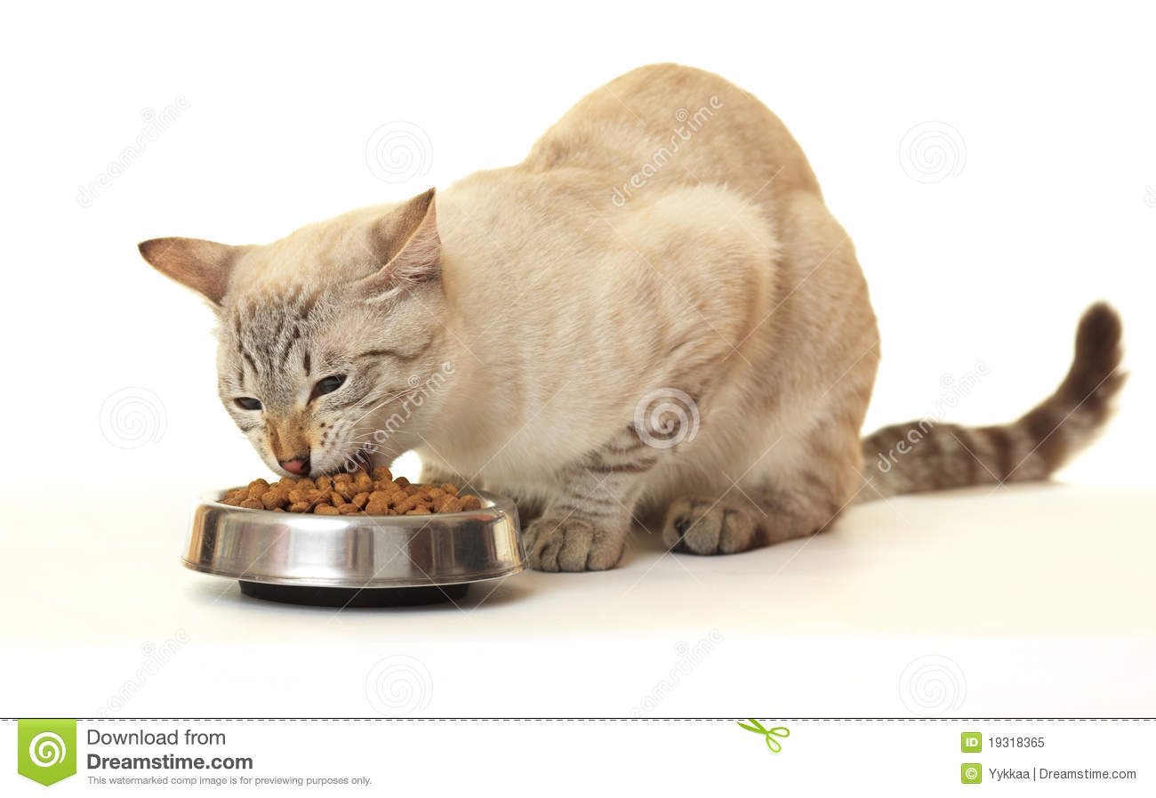When Kittens Eat Dry Food