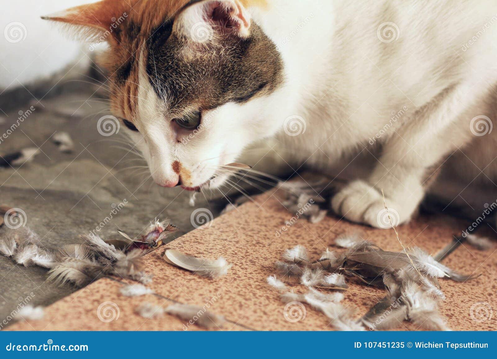 Cat Eating Bird Hunting Instinct-Concept