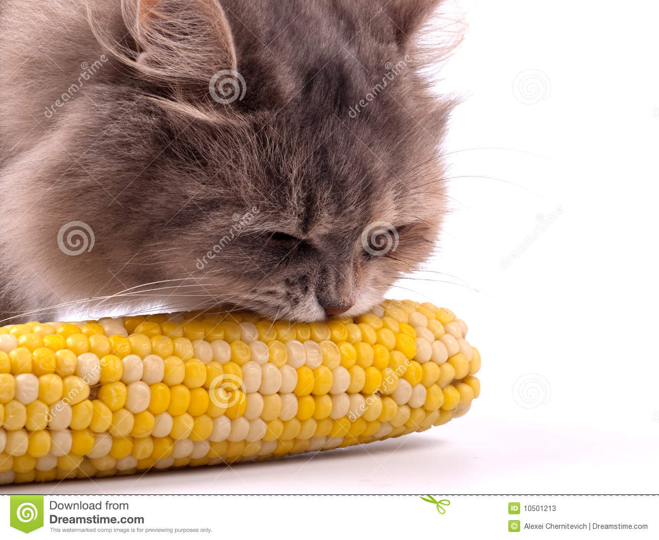 Cat Eating Corn On The Cob Video