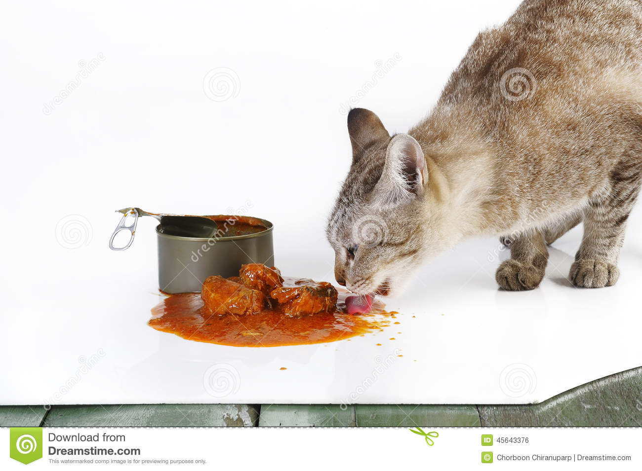 Cat eating stock photo image of sardines brown for Can cats eat raw fish