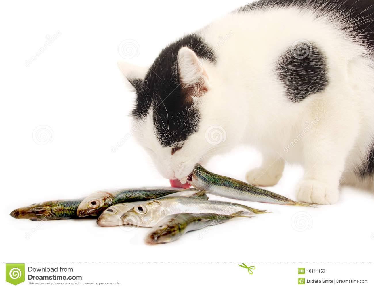 Cat eating fish royalty free stock images image 18111159 for Can cats eat raw fish