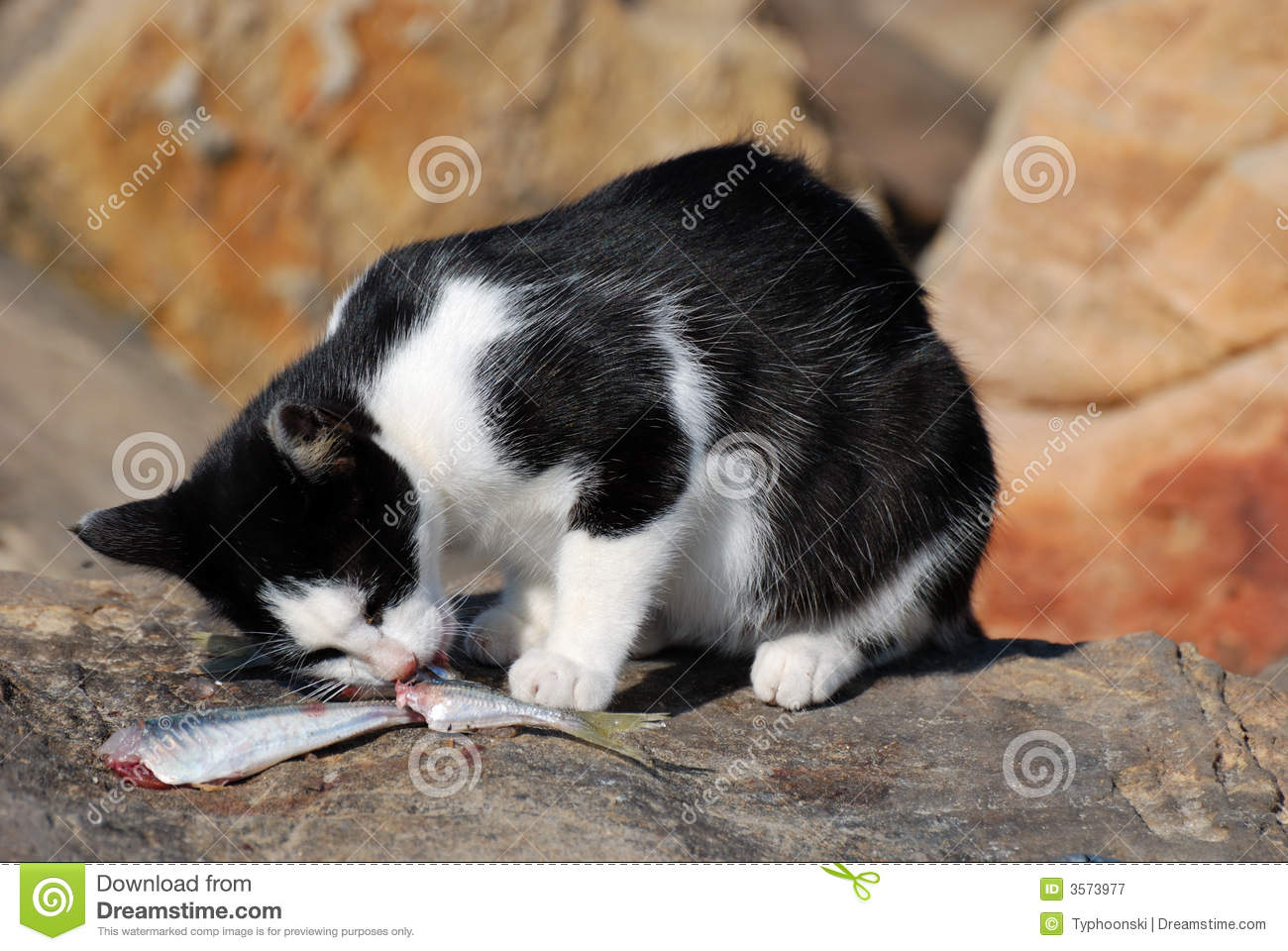 Cat eating fish stock image image of kitty kitten for Dreaming of eating fish