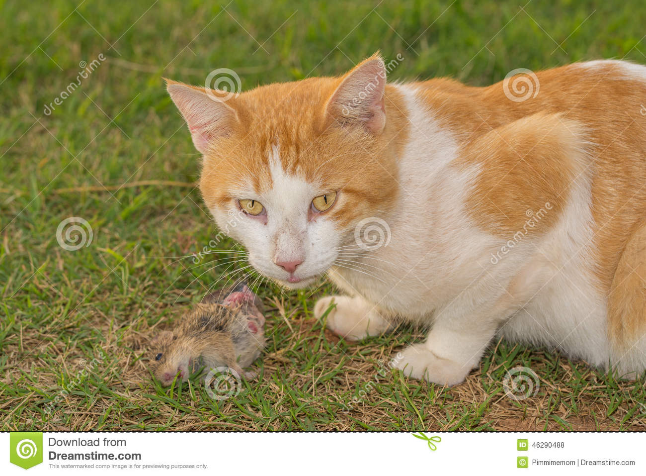 Stray Cat Eating Food