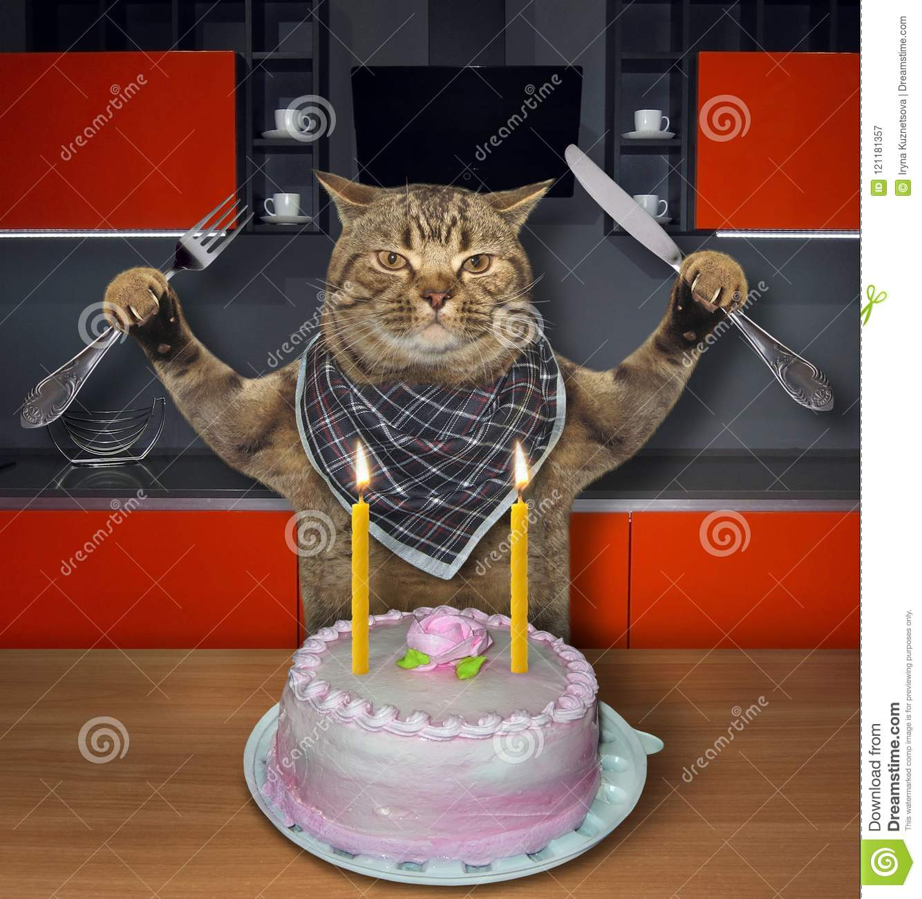 Cat Eats The Birthday Cake 2 Stock Image Image Of Holiday Humor