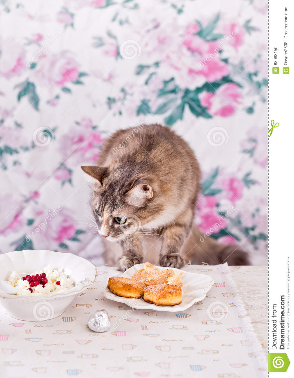 Cat Is Skinny But Eats All The Time
