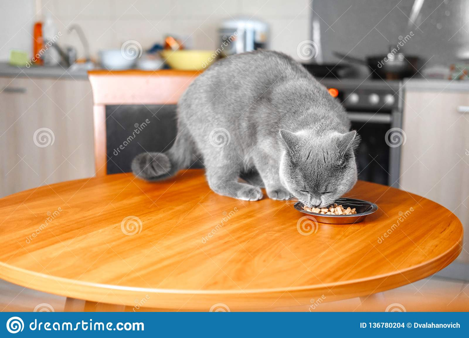 Cat eats food from a bowl at the table