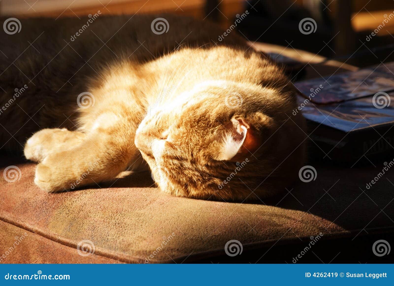 Cat enjoying sunshine