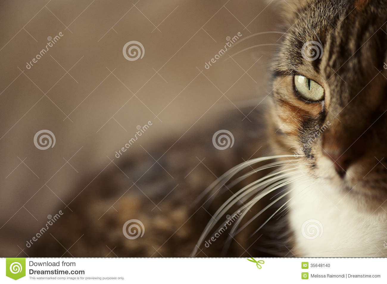 Cat Eye Side View Stock Photo Image 35648140