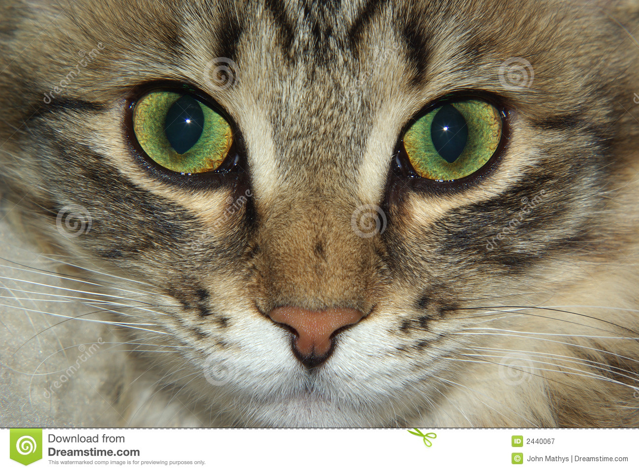 Cats Eyes Change Color Age