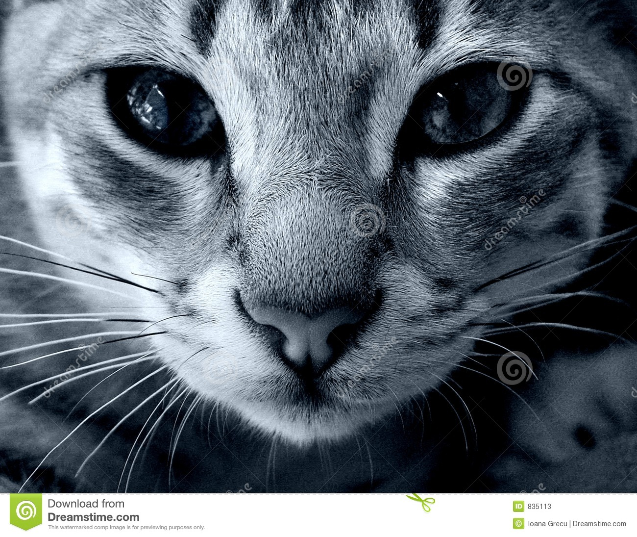 Download Cat eyes stock image. Image of whiskers, emotion, closeup - 835113