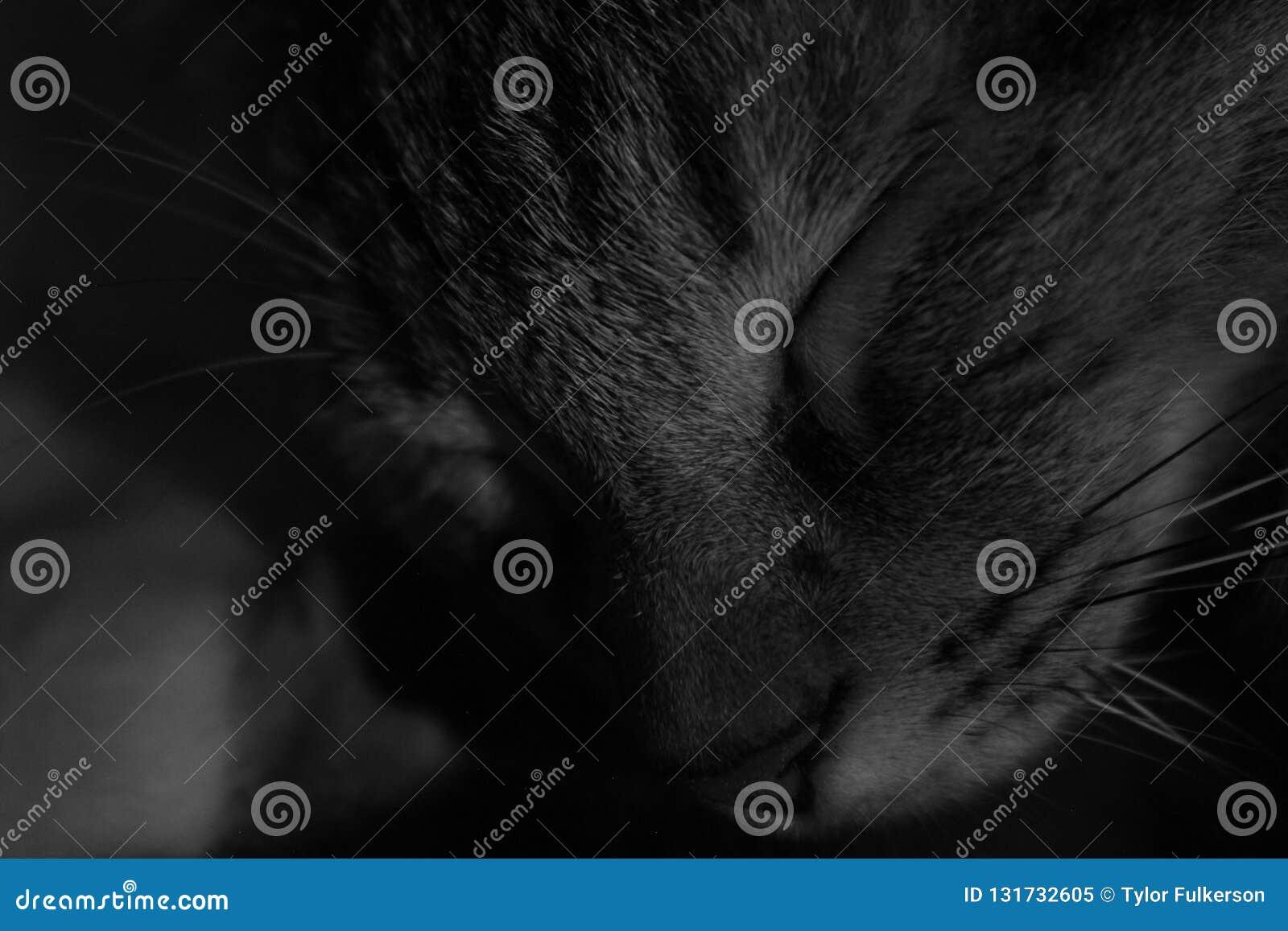 Cat With Eyes Closed preto e branco
