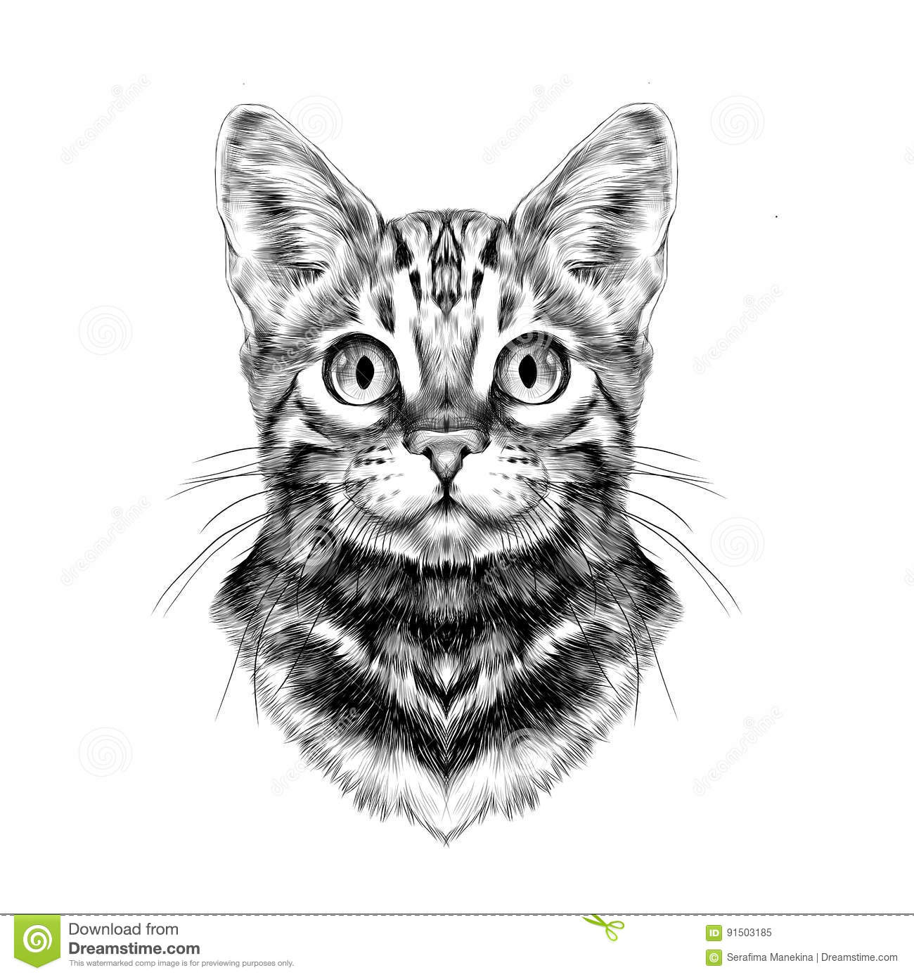 This is a picture of Soft Drawing Cartoon Cat Front Facing