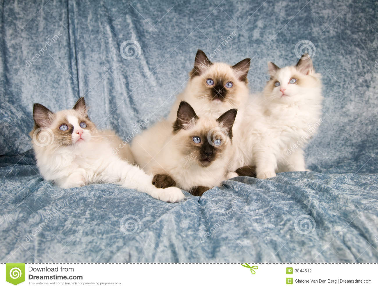 Cat Family Stock Photography Image 3844512