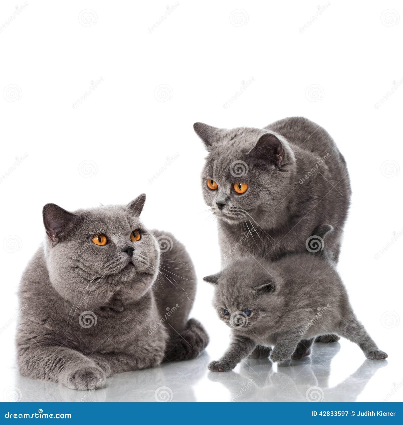funniest cat pics ever