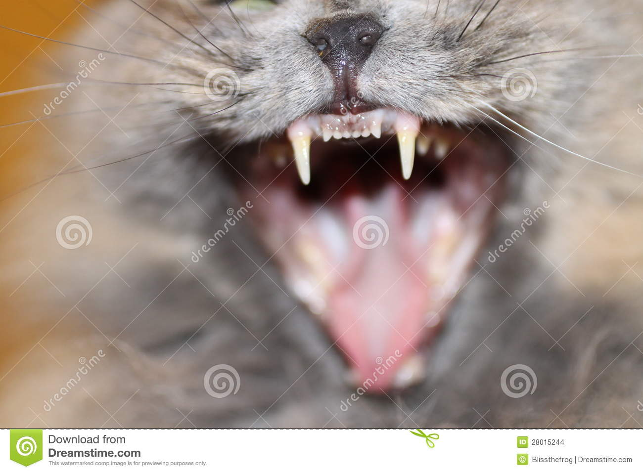Cat Fangs Stock Images - Image: 28015244