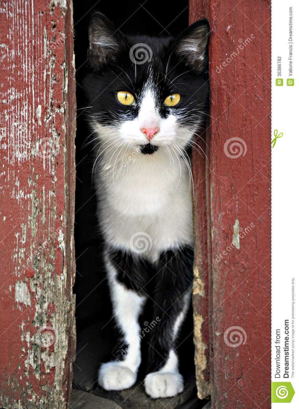 Cat Stock Photography Image 35386782