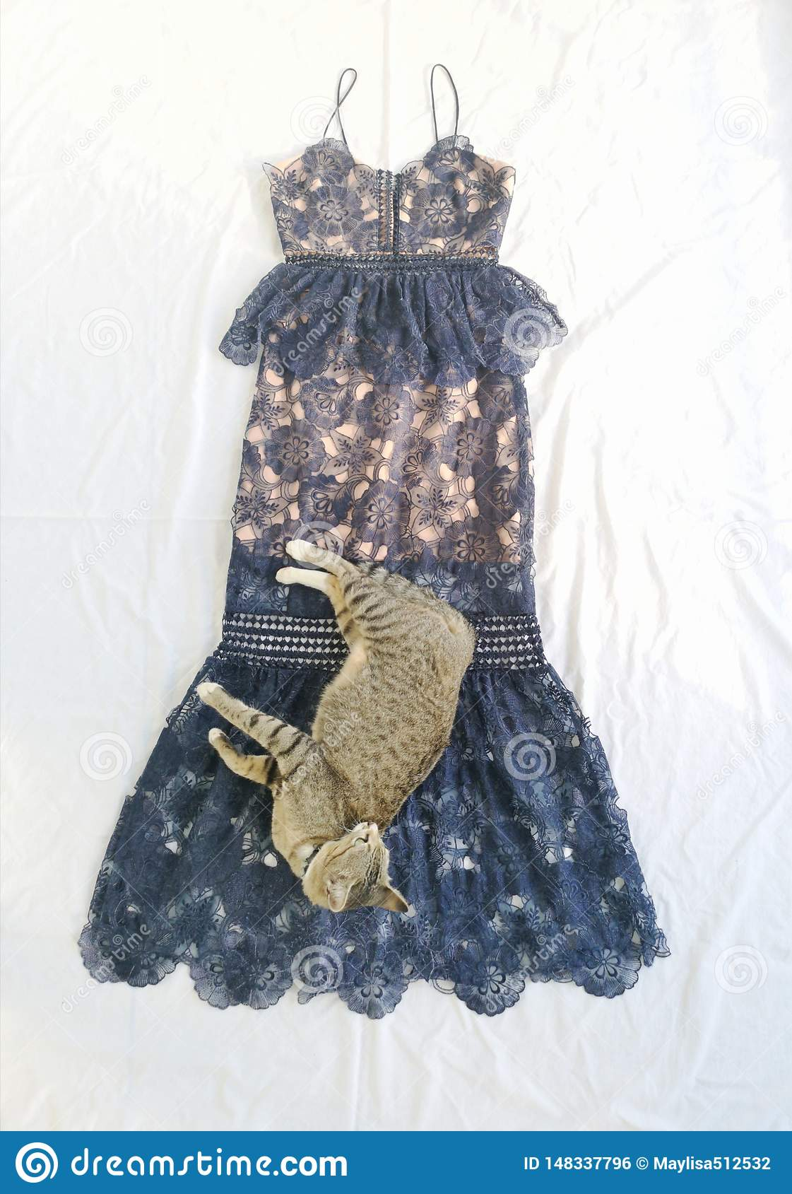 Cat and fashion