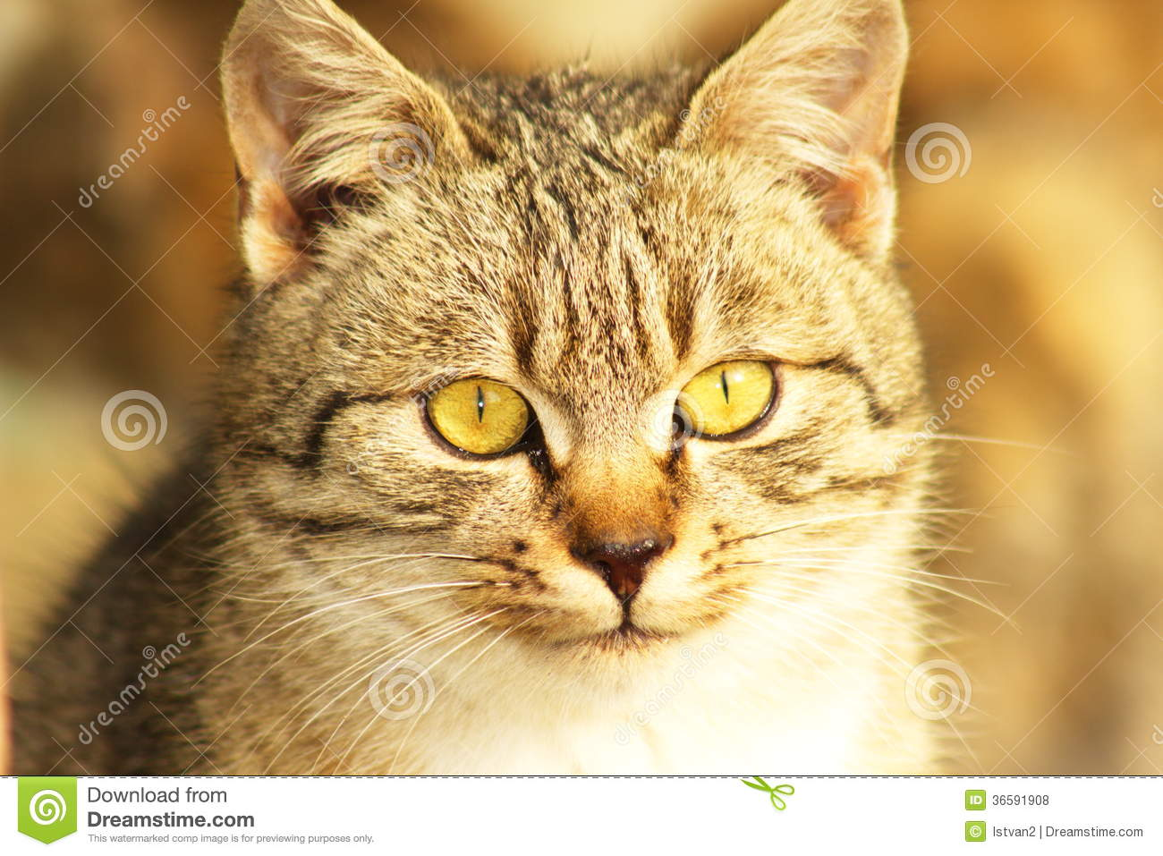 an overview of the small carnivorous animal felis catus The cat (felis silvestris catus), also known as the domestic cat or housecat to distinguish it from other felines and felids, is a small carnivorous mammal that is.
