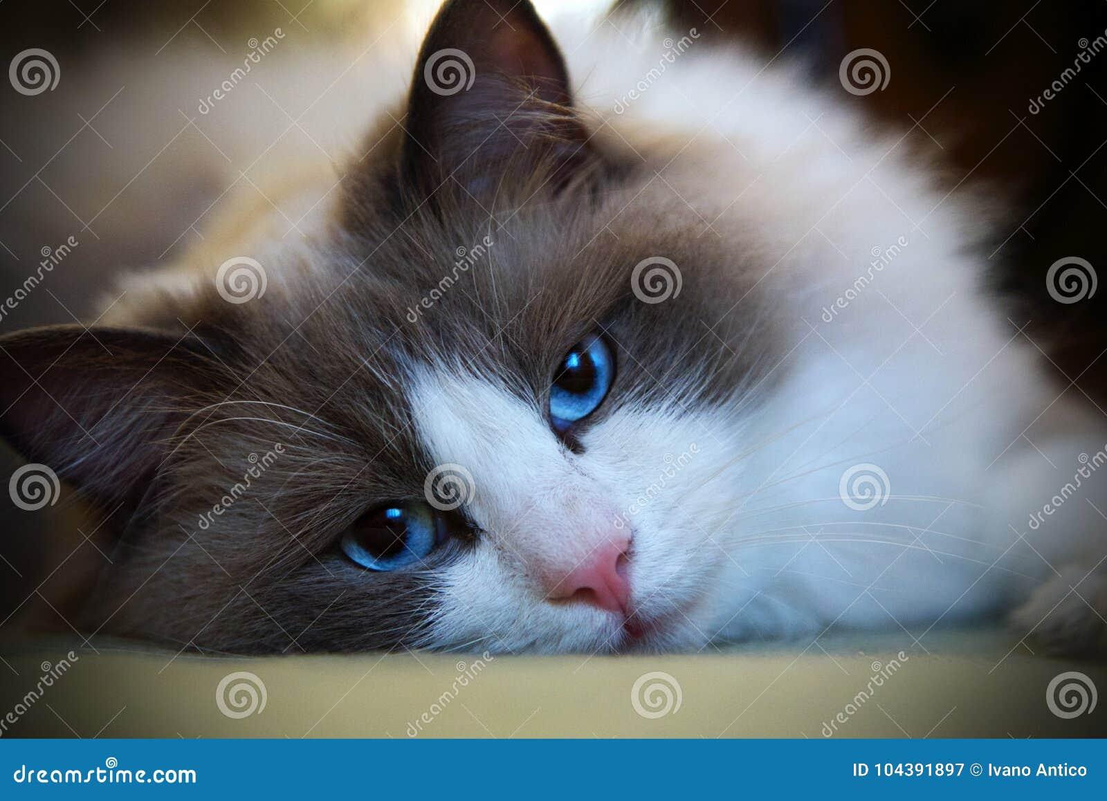 Cat Filippo