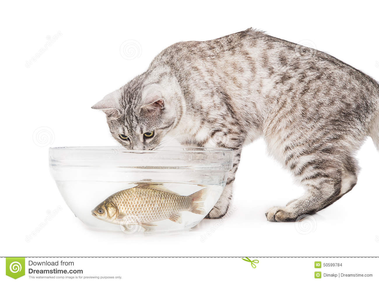 how to cook white fish for cats