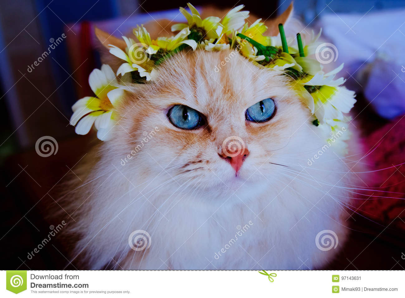 Cat With A Flower Crown In Its Head Stock Image Image Of Kitty