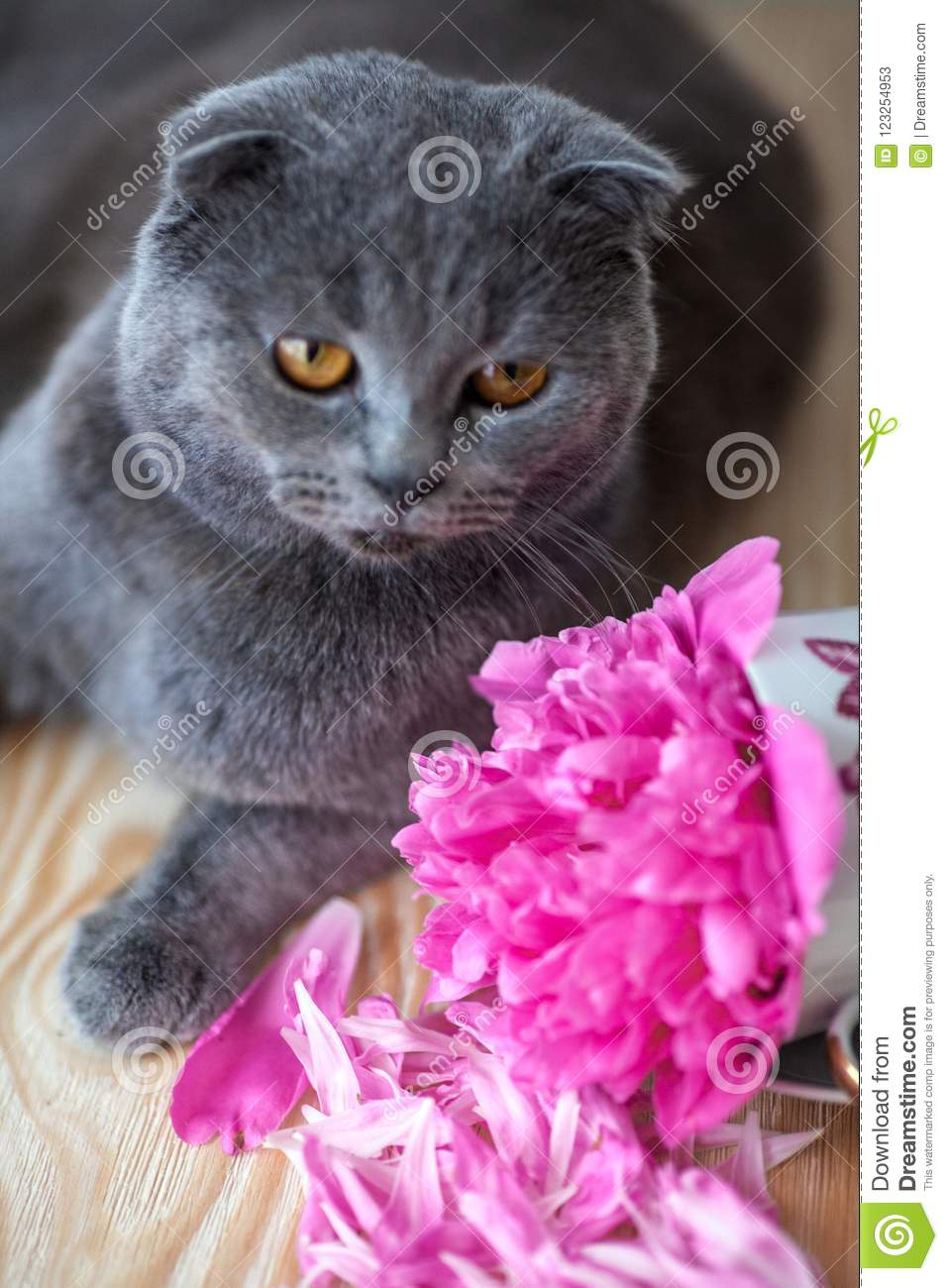 Cat and flowers stock image image of breed flower 123254953 download cat and flowers stock image image of breed flower 123254953 mightylinksfo