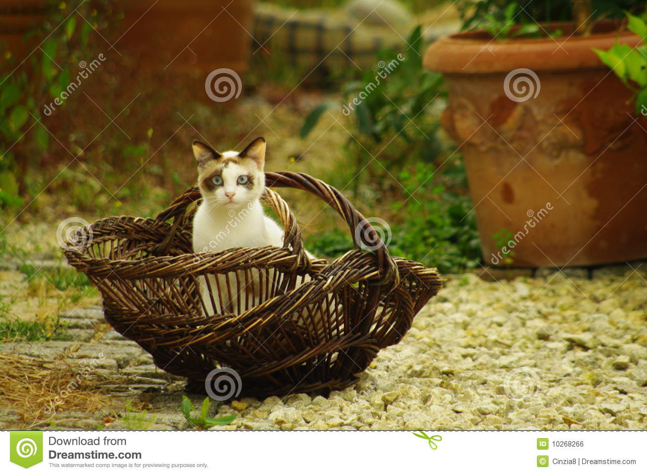 Cat in french basket