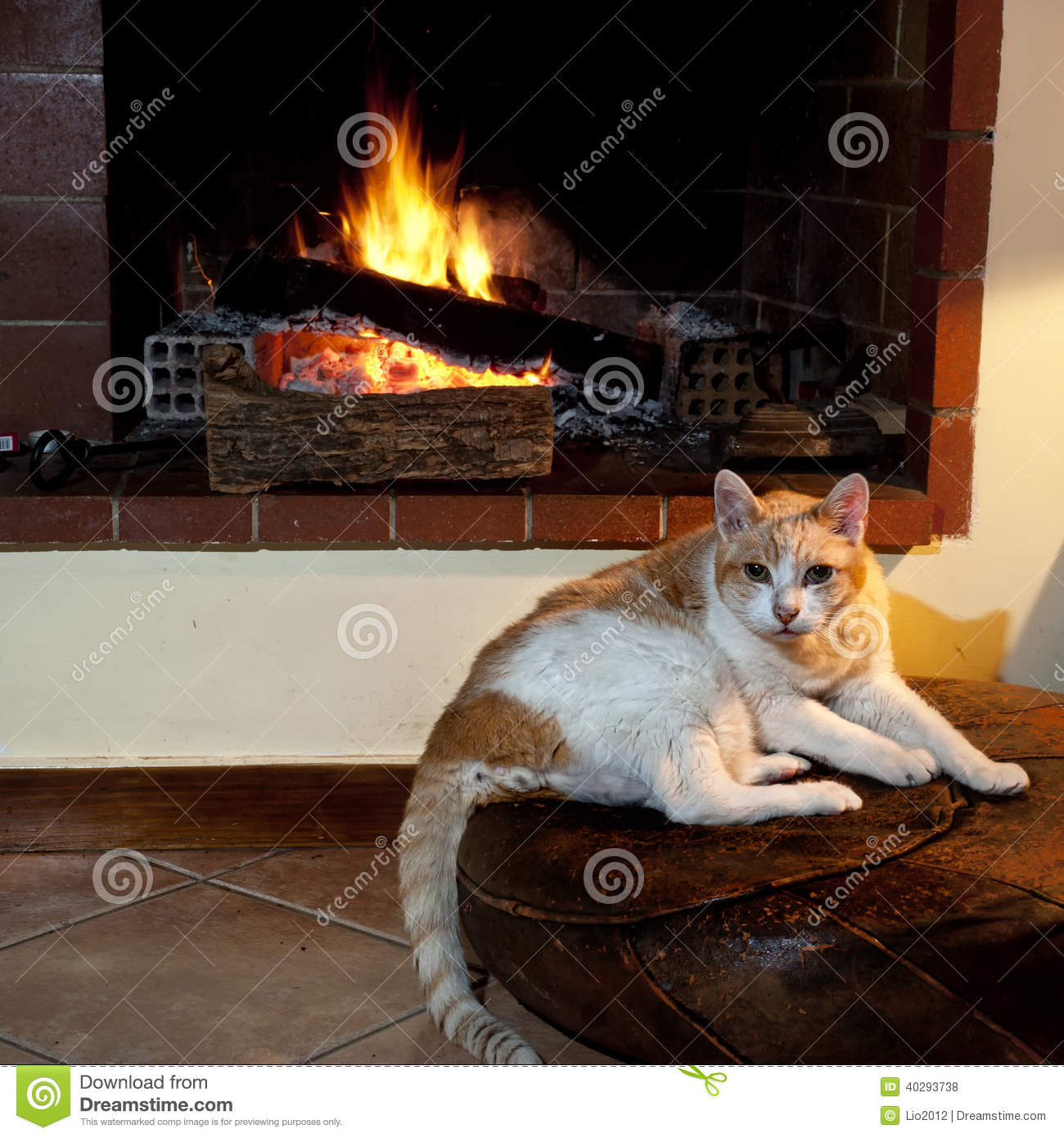 Cat In Front Of Fireplace Stock Photo - Image: 40293738