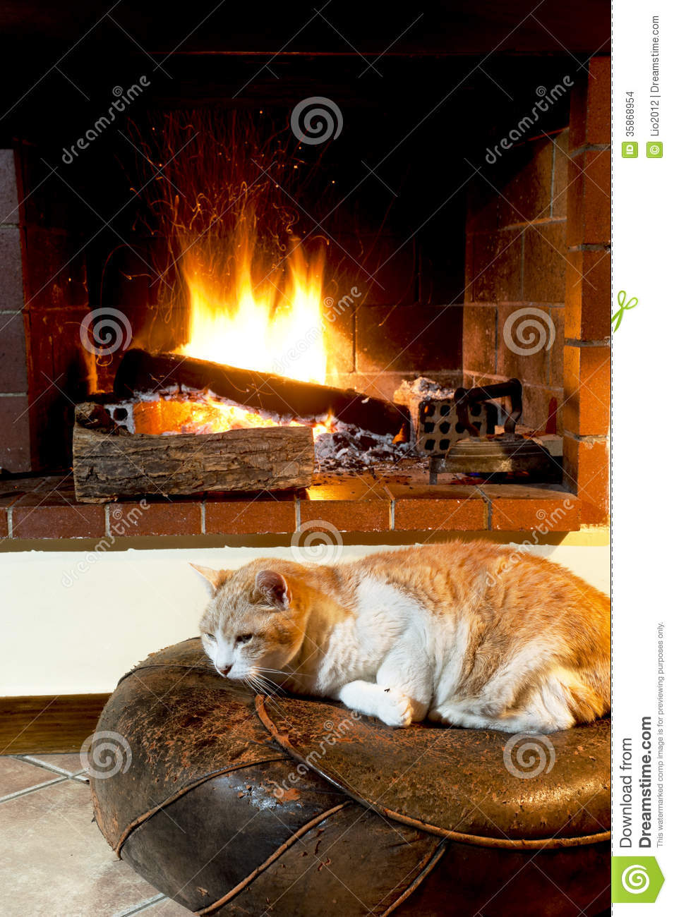 Cat In Front Of Fireplace Stock Photo Image Of Room