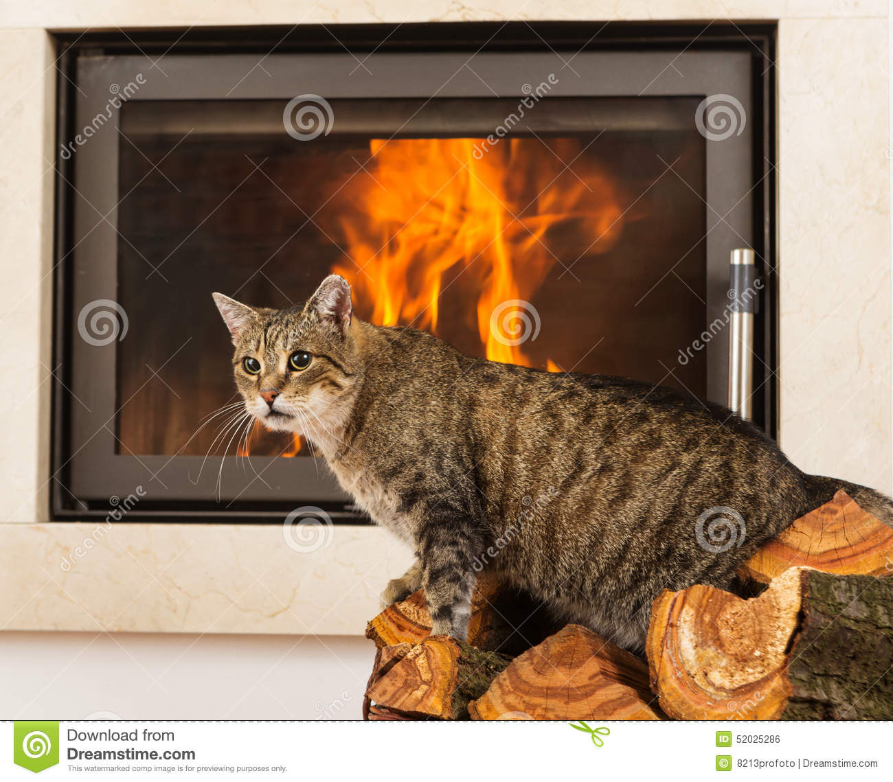 Cat In Front Of Fireplace Stock Photo - Image: 52025286