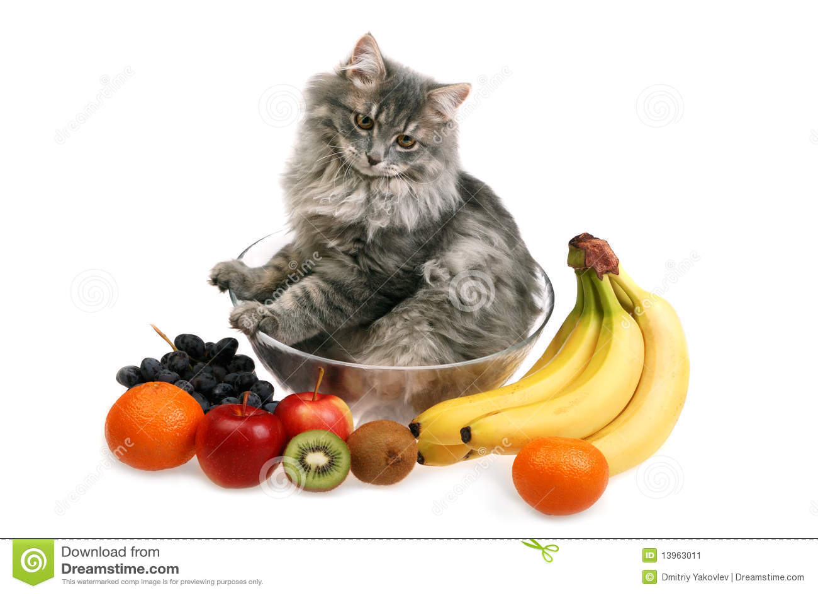 Fruity Cat