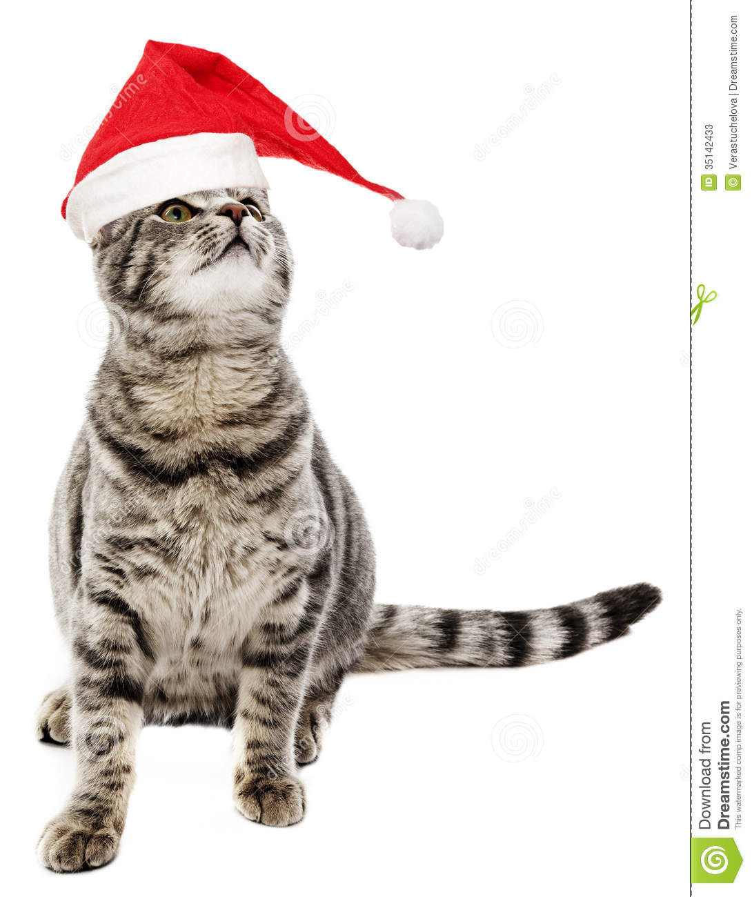 Funny Smiling Cat Cat with funny santa cap Smiling Dog And Cat