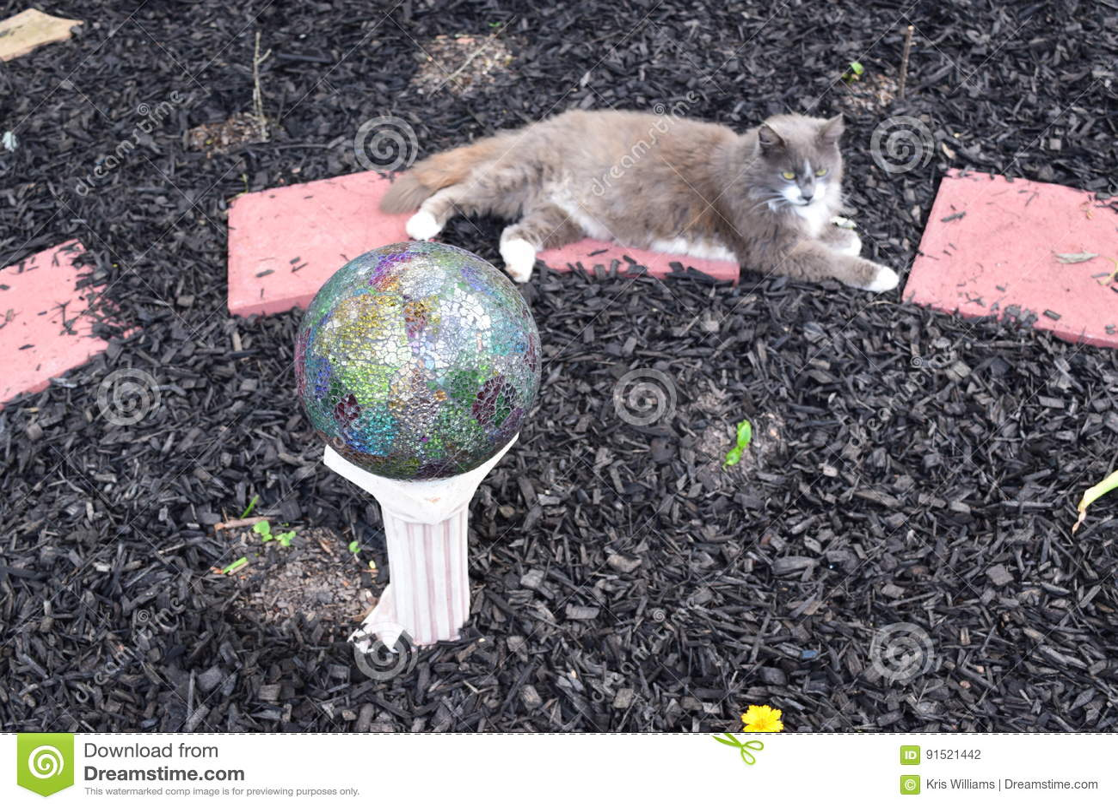 Cat and gazing ball