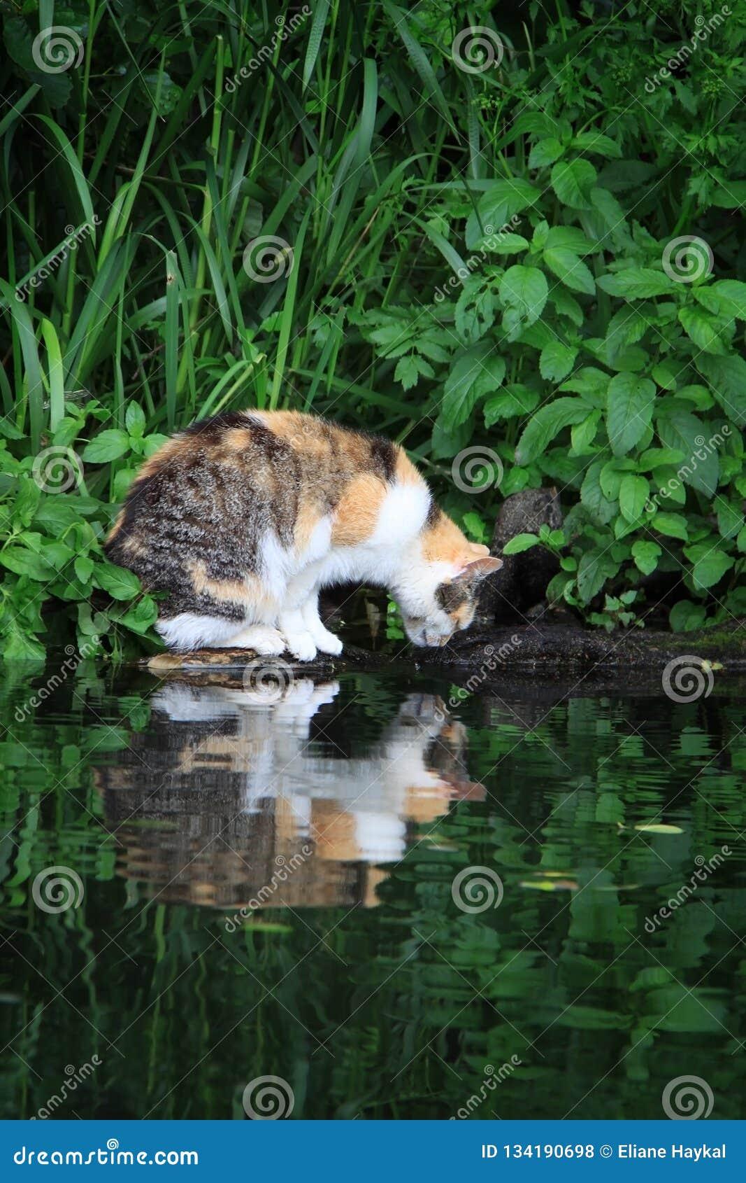 Cat Gazing in Water