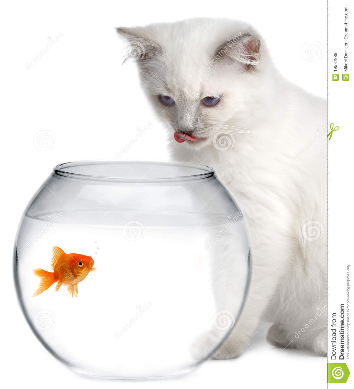 Cat And A Gold Fish Royalty Free Stock Photos - Image: 19532988