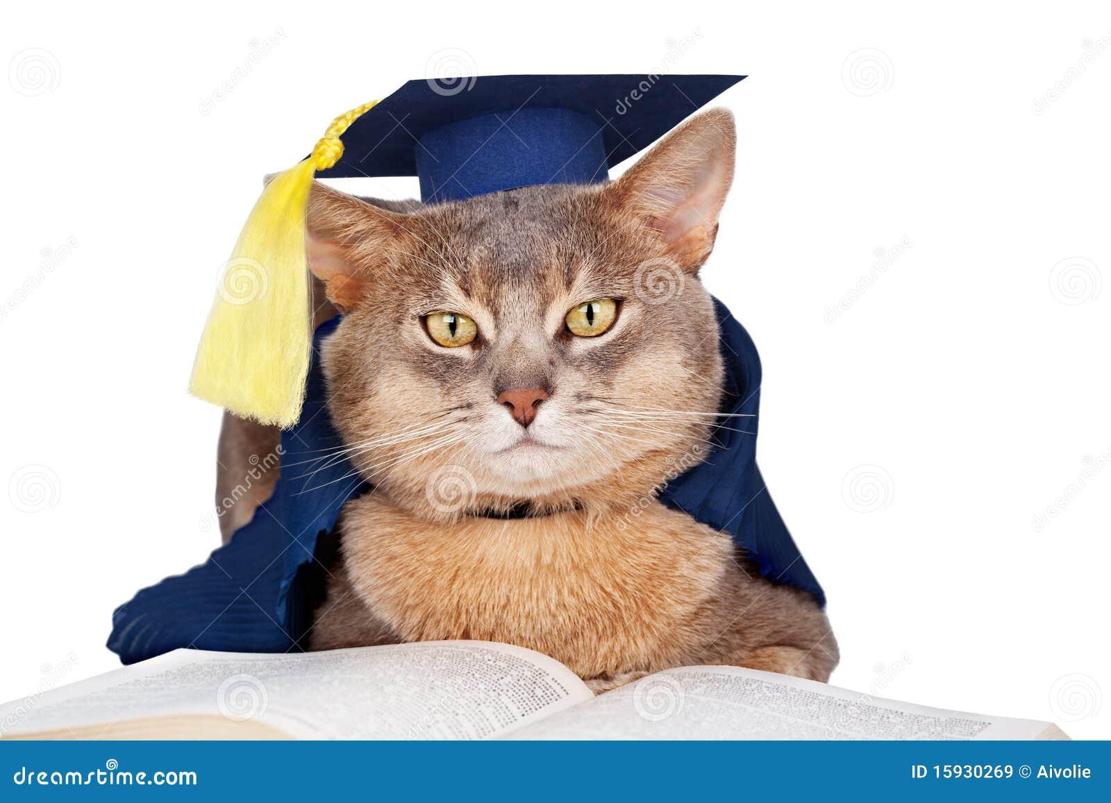 Cat Wearing Graduation Hat