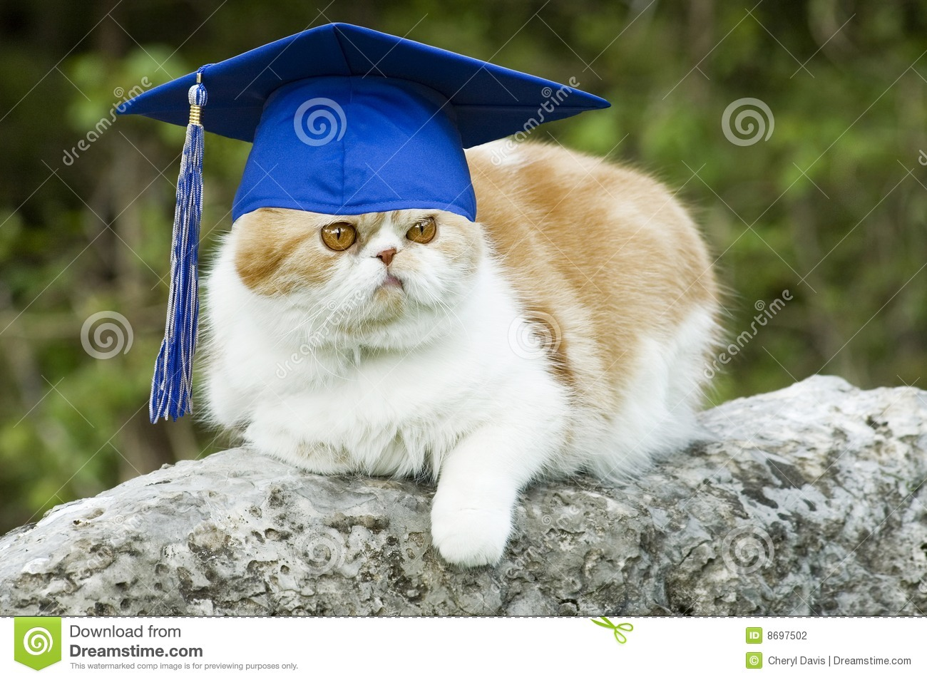 Cat with Graduation Hat