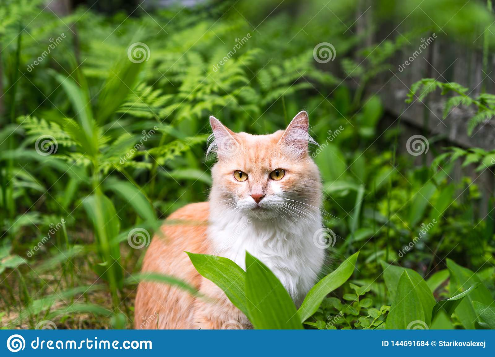 Cat on the grass , cat in the forest