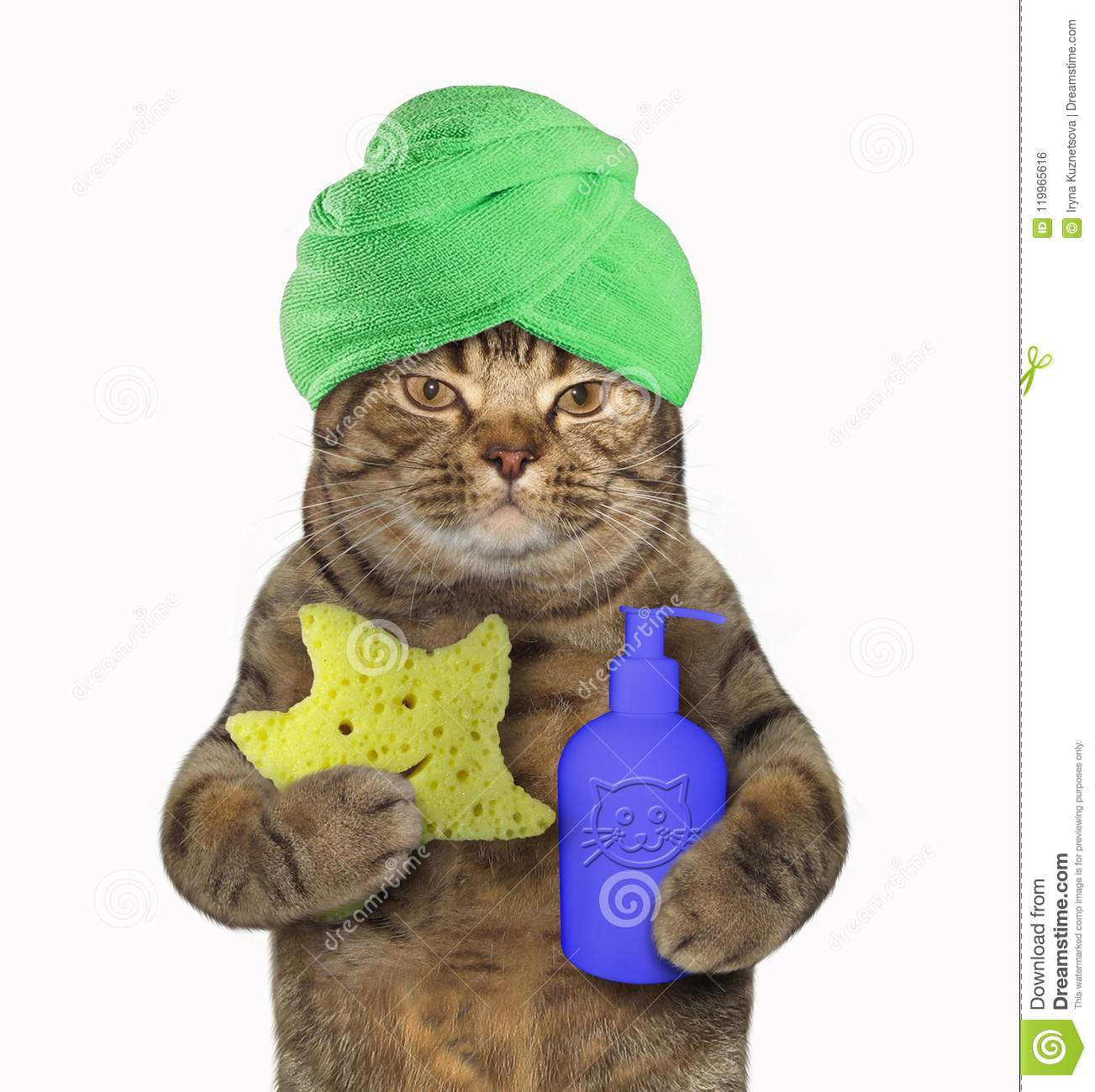 Cat in green turban with shampoo and sponge