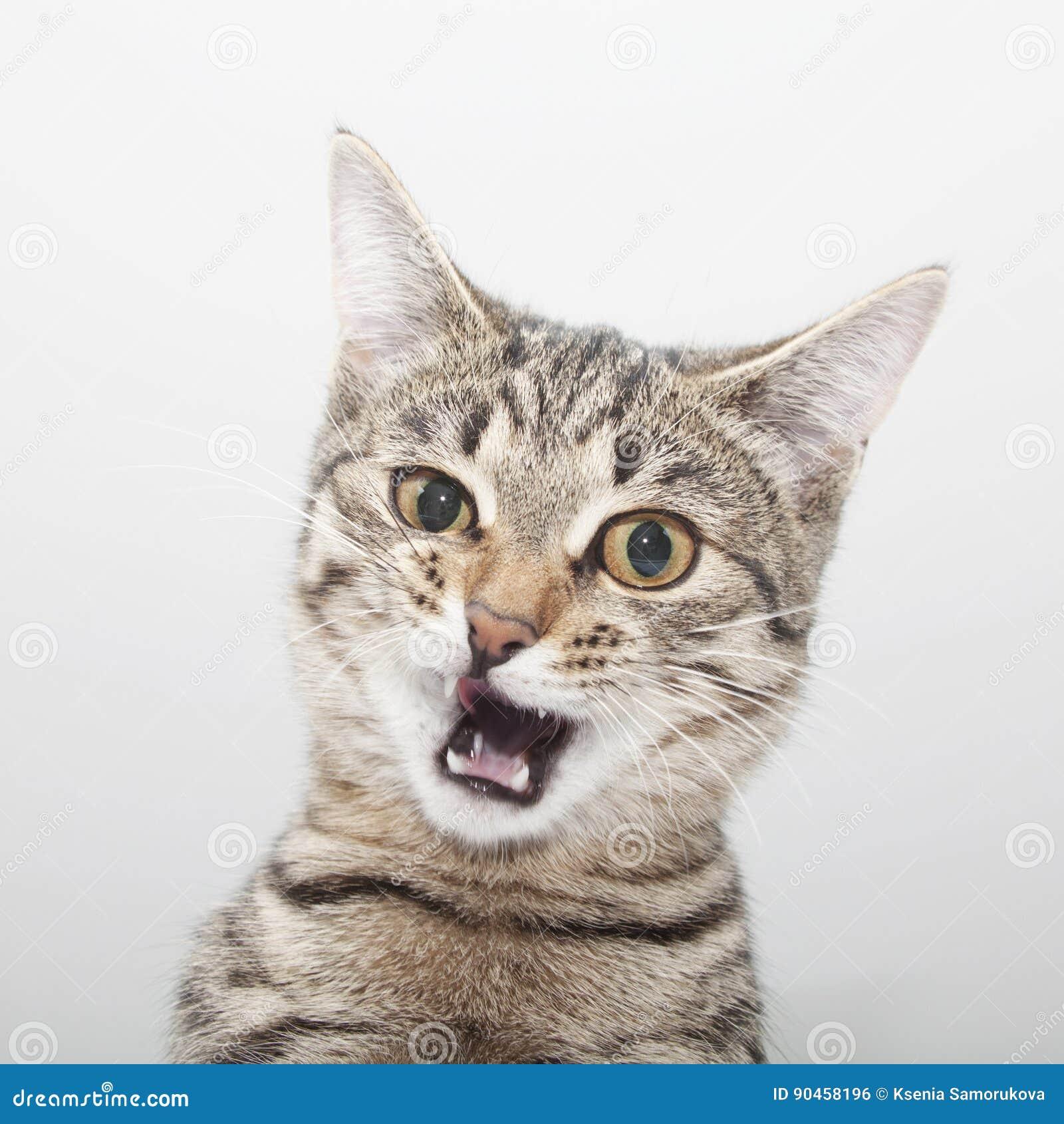 Cat facial twitch