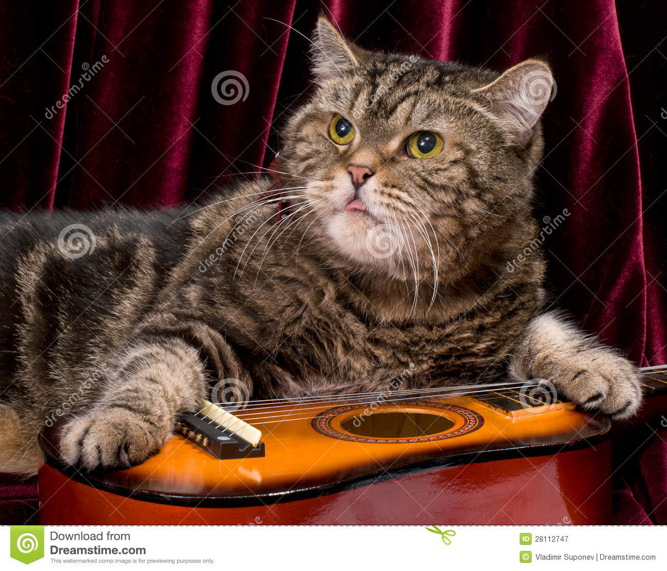 cat with guitar stock image image of animals curtain