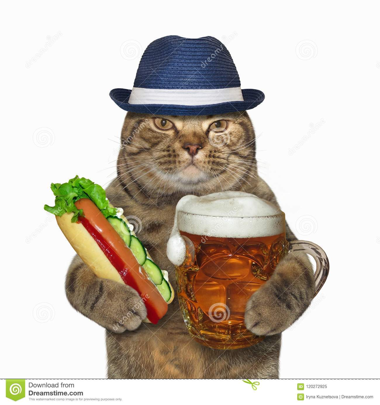 Cat With Glass Of Beer And Hot Dog Stock Image