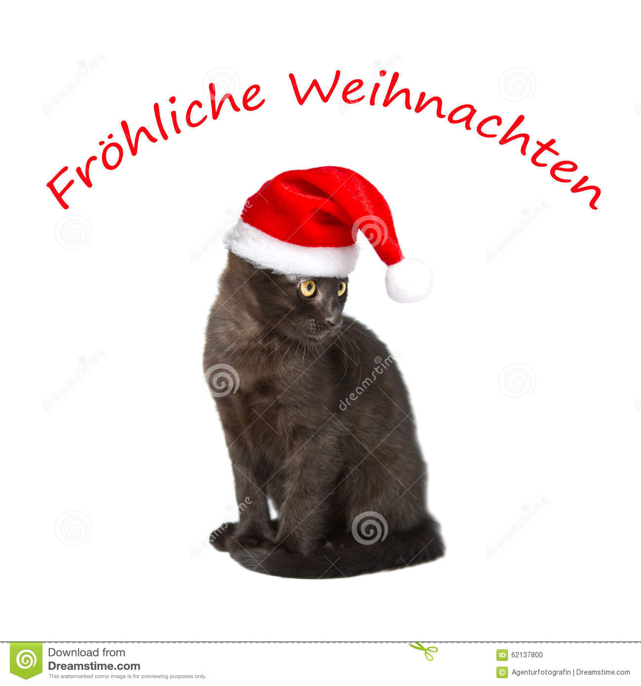 Weihnachten Funny.Cat Hat Text Merry Christmas Stock Photo Image Of German