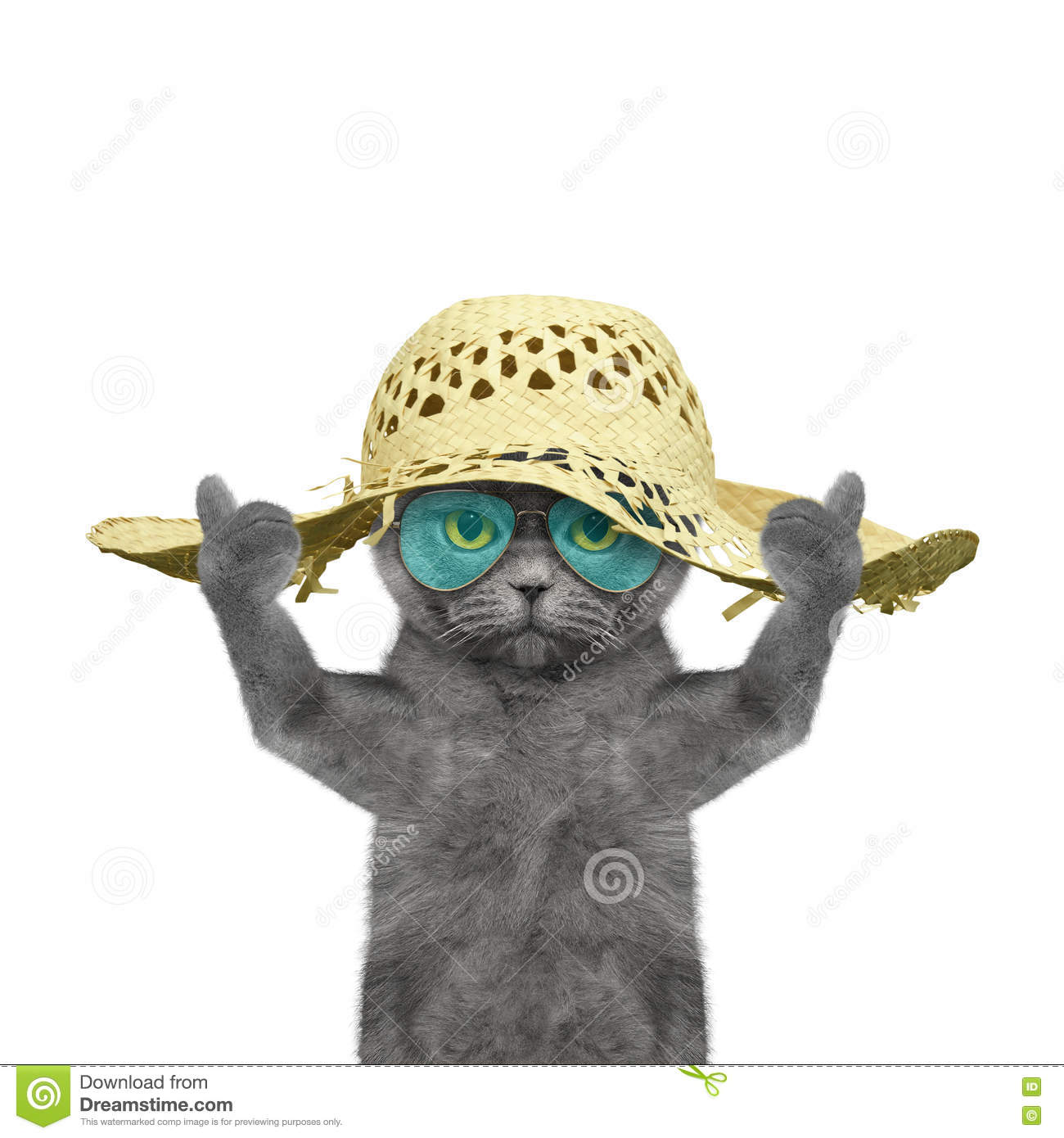 Cat Have A Rest In Summer Holiday Stock Photo Image